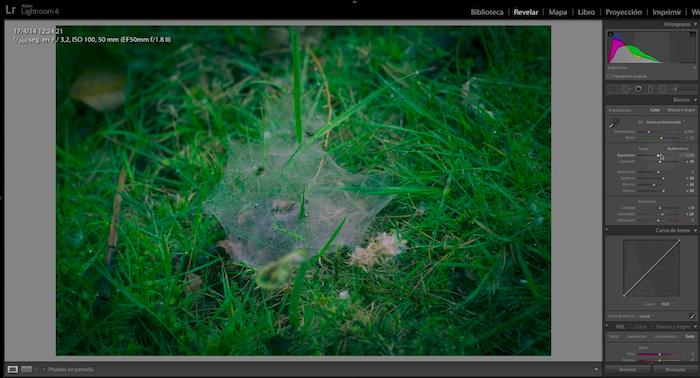 Lightroom: Revelado con proceso cruzado para fotografía con tonos verdes