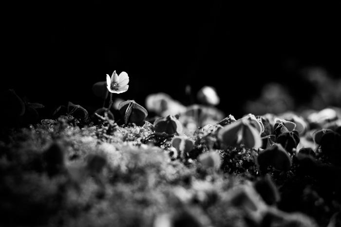 Blanco y Negro con fuerte contraste